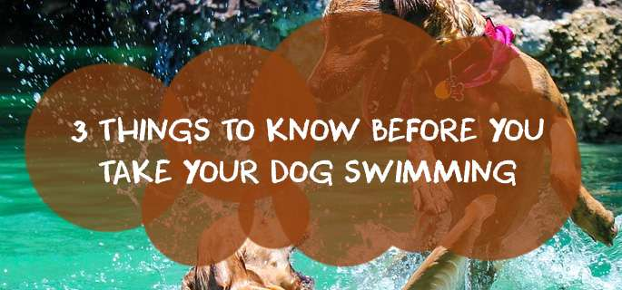 3 Things to know Before You Take Your Dog Swimming