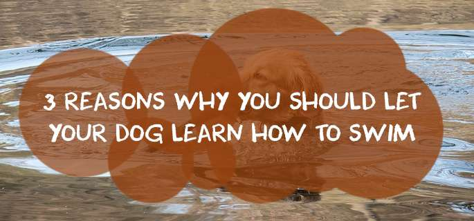 3 Reasons Why You Should Let Your Dog Learn How to Swim
