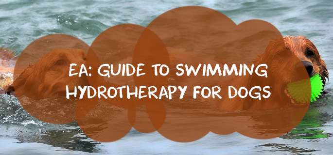 EA: Guide to Swimming Hydrotherapy for Dogs